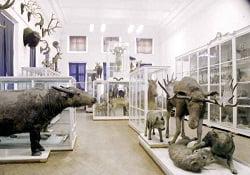 Зоологический музей им. Э. А. Эверсманна Казанского университета