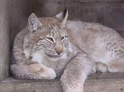 Казанский Зоопарк1