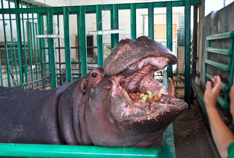Казанский Зоопарк3