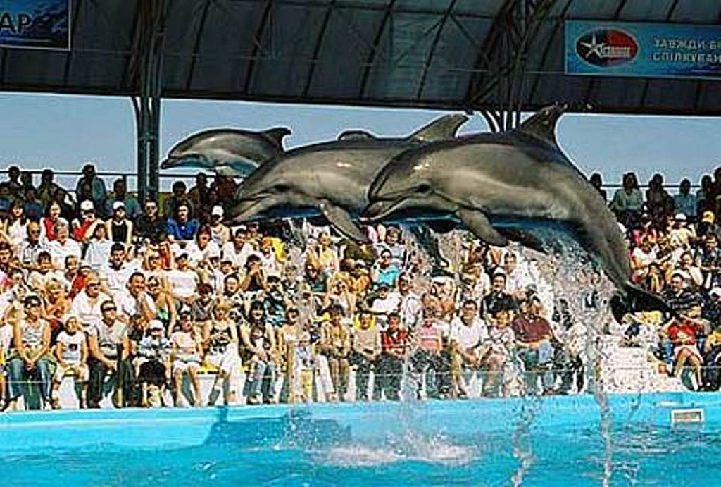 Экскурсия в Дельфинарий.